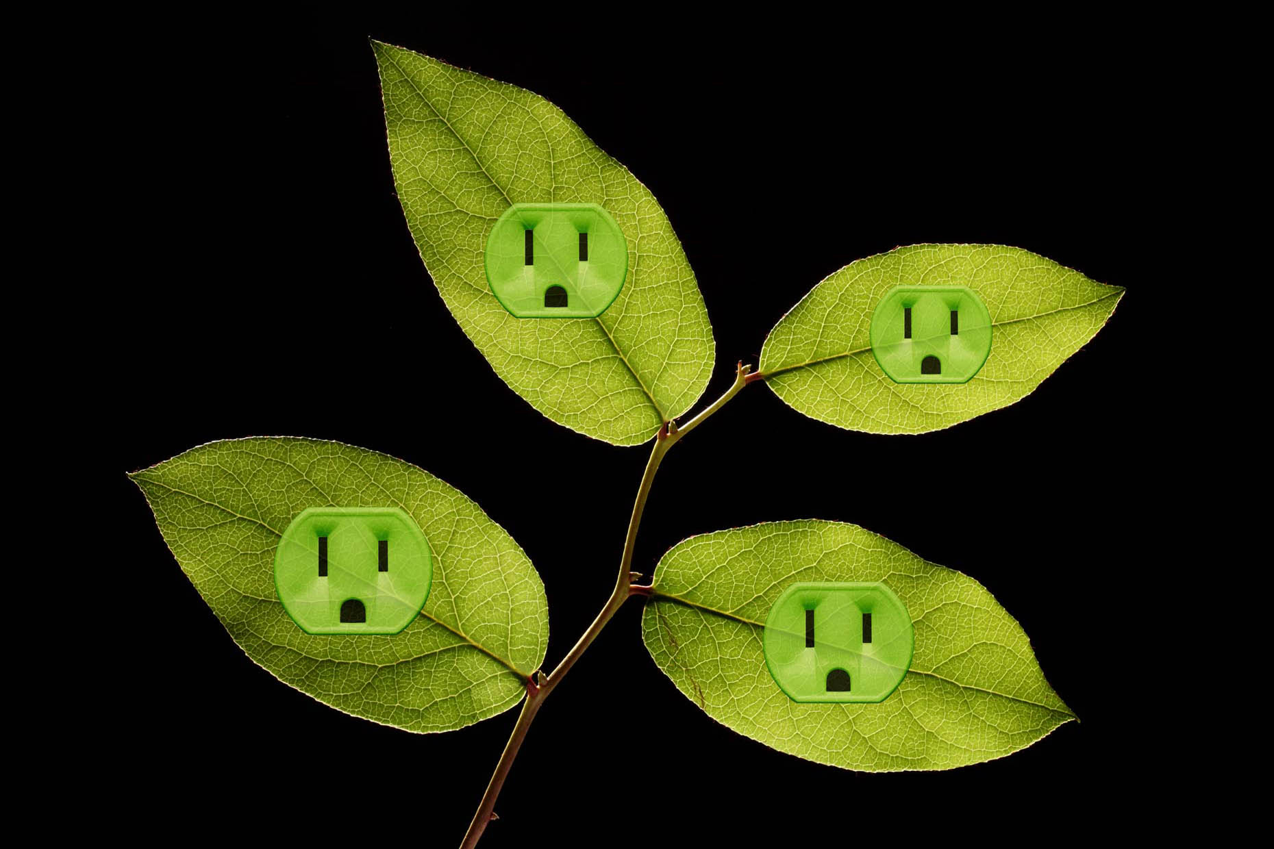 ElecrticLeafOutlets